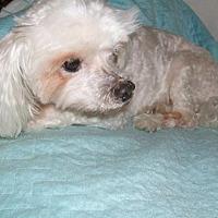 Adopt A Pet :: Prince Charming (FL) - Chattanooga, TN