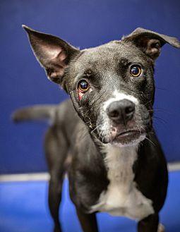 Adopt A Pet :: Shelia  - Henderson, NC