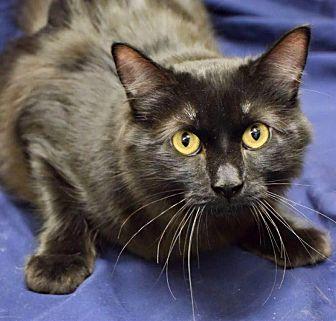 Adopt A Pet :: Dobby  - Edmond, OK