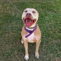 Adopt A Pet :: Misty - justin, TX