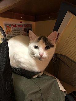 Adopt A Pet :: Holiday Angel  - Blasdell, NY