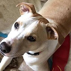 Puppies for Sale in Binghamton New York - Adoptapet com