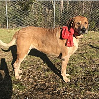 Dogs -Carteret County Humane Society and Animal Shelter