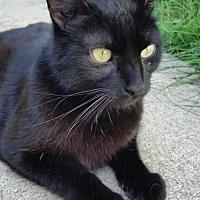 Adopt A Pet :: Wayne ADULT MALE - Morehead, KY