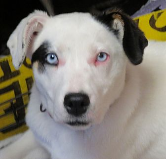 Adopt A Pet :: Elizabeth  - Saint Paul, MN