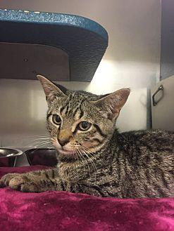 Adopt A Pet :: Zack  - Moose Jaw, SK