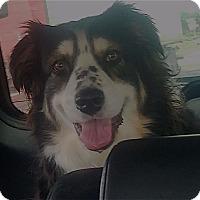 Adopt A Pet :: Princess - Minneapolis, MN