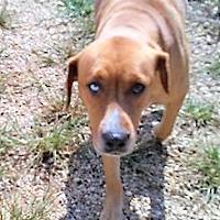 Adopt A Pet :: Lila - Glenwood, GA