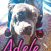 Adopt A Pet :: Adele - Odessa, TX
