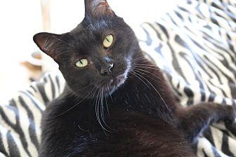 Adopt A Pet :: Sadie  - Concord, NC