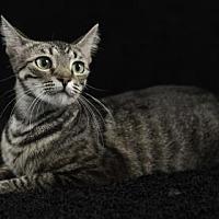 Adopt A Pet :: June - Gainesville, FL