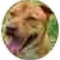 Adopt A Pet :: Red - Kingwood, TX