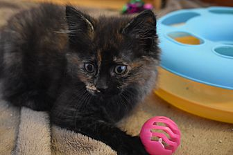 Adopt A Pet :: Haley  - Concord, NC