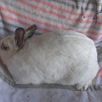 Adopt A Pet :: Susan - Idaho Falls, ID