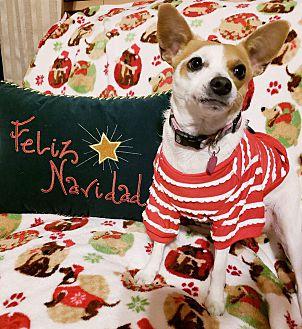 Adopt A Pet :: Sharky  - Oklahoma City, OK