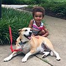 Adopt A Pet :: Coen