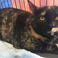 Adopt A Pet :: Tori - Gaithersburg, MD