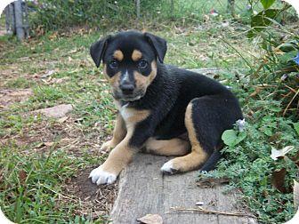 blanchard ok pit bull terrier meet katy a dog for adoption