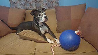 Adopt A Pet :: Lexi  - Clarksville, TN