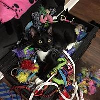 Adopt A Pet :: Bo Jangles (RS) 4.10.17 - Orlando, FL
