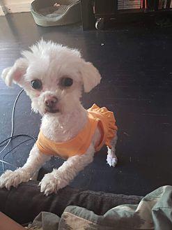 Adopt A Pet :: Zoe  - Renton, WA