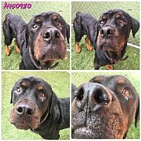 Adopt A Pet :: DRAGON - San Antonio, TX