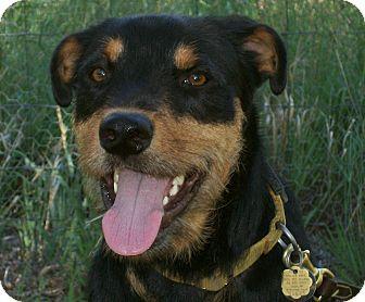 Questa Nm Rottweiler Meet George A Pet For Adoption