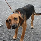 Adopt A Pet :: Berry