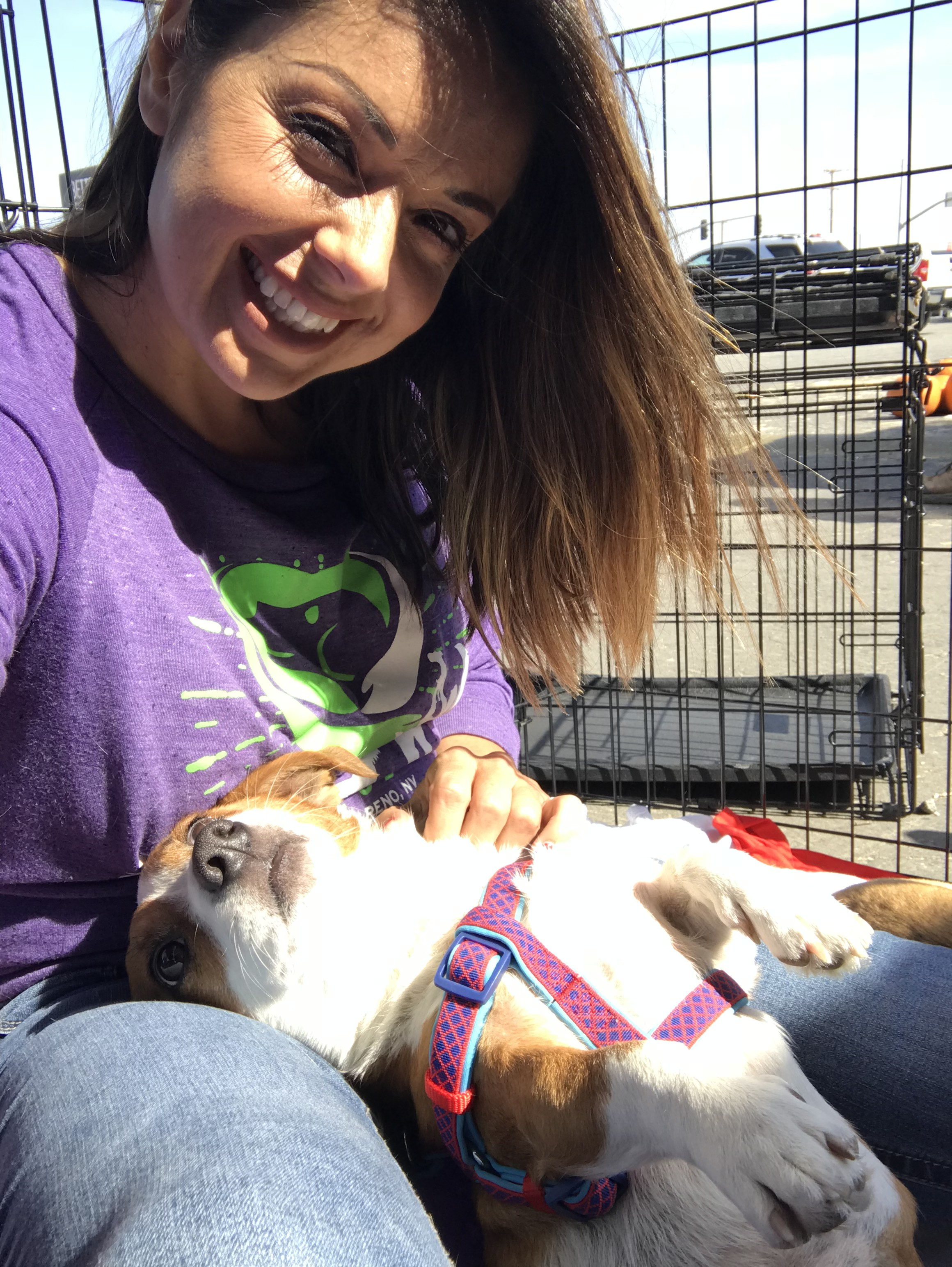 Bakersfield Ca Welsh Corgi Meet Romeo A Pet For Adoption