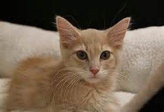Adopt A Pet :: The Q babies  - Virginia Beach, VA