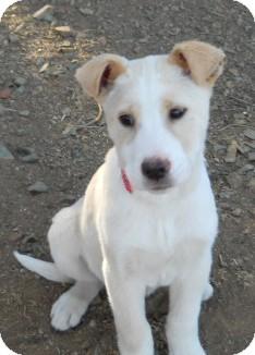 Dewey Az German Shepherd Dog Meet Miranda A Pet For