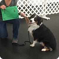 Adopt A Pet :: Victoria - Minneapolis, MN