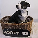 Adopt A Pet :: Phoenix
