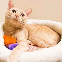 Adopt A Pet :: Chirp - Chicago, IL