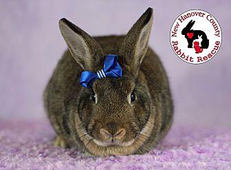 Adopt A Pet :: Clover  - Wilmington, NC