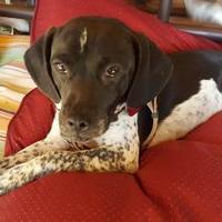 Adopt A Pet :: Ace - Hopkins, SC