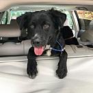 Adopt A Pet :: Simone- No Longer Accepting Applications!