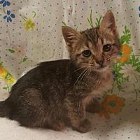 Adopt A Pet :: VIV - Weatherford, OK