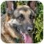 Photo 1 - German Shepherd Dog Dog for adoption in Los Angeles, California - Franz von Scholl