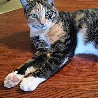 Adopt A Pet :: Daisy Lu Lu - Fort Lauderdale, FL