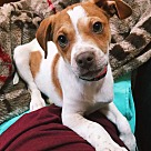 Adopt A Pet :: Polonius