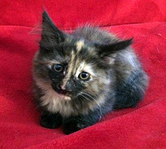 Adopt A Pet :: Abigail  - Concord, NC