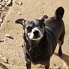 Adopt A Pet :: Elle