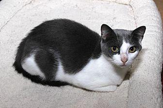 Adopt A Pet :: Mama Ming  - Floral City, FL