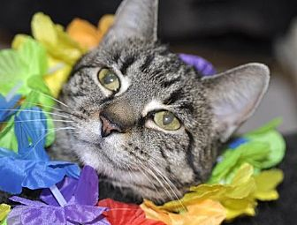 Adopt A Pet :: Becca  - Liberty, NC
