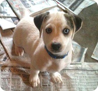 Newburgh In Basset Hound Meet Thomas A Pet For Adoption
