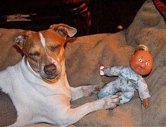 Adopt A Pet :: Quincy  - Aurora, CO