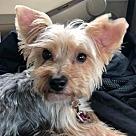 Adopt A Pet :: Harley Boy
