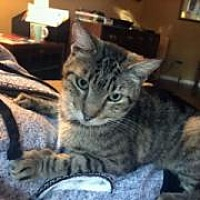 Adopt A Pet :: Syrup - Austin, TX