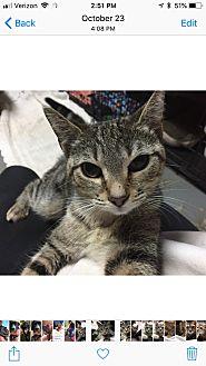Adopt A Pet :: ZOEY  - Northwood, NH